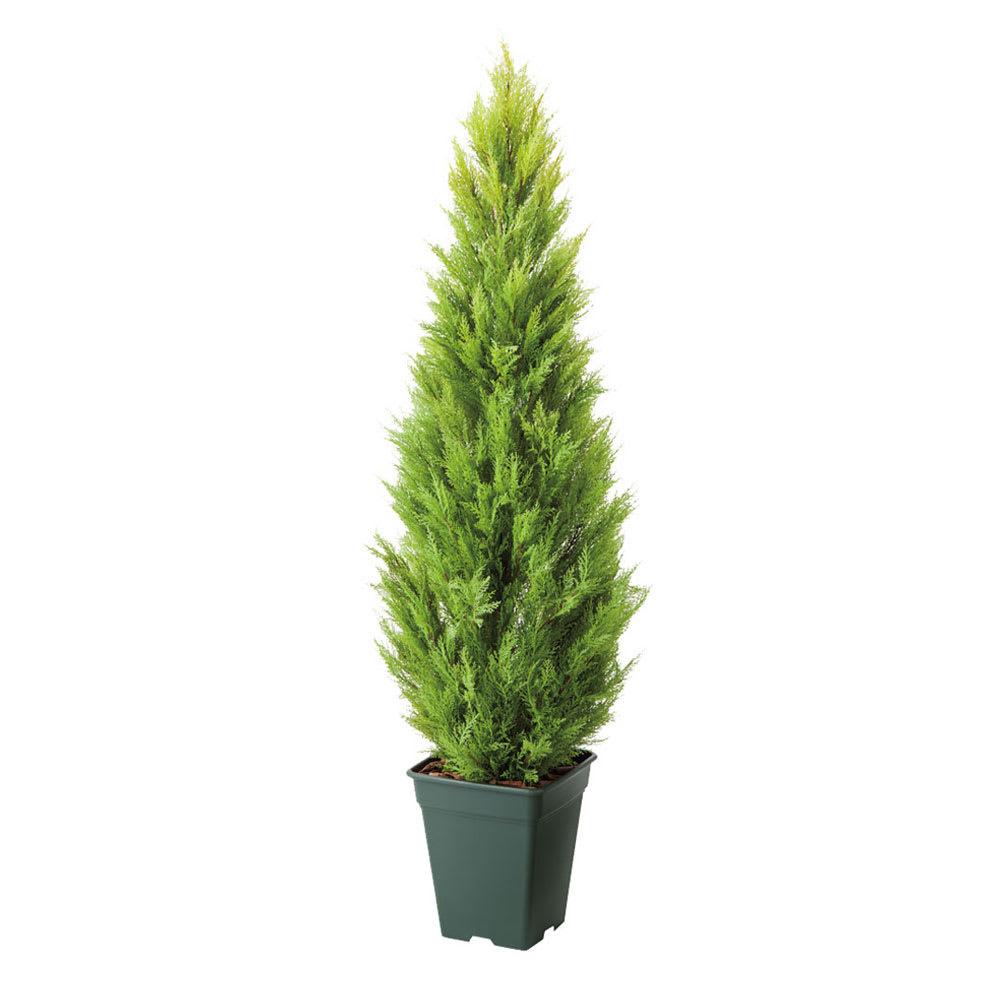 高さ120cm(人工観葉植物ゴールドクレスト) ※写真は高さ180cmタイプです。 ※お届けの鉢のデザインは若干異なります。