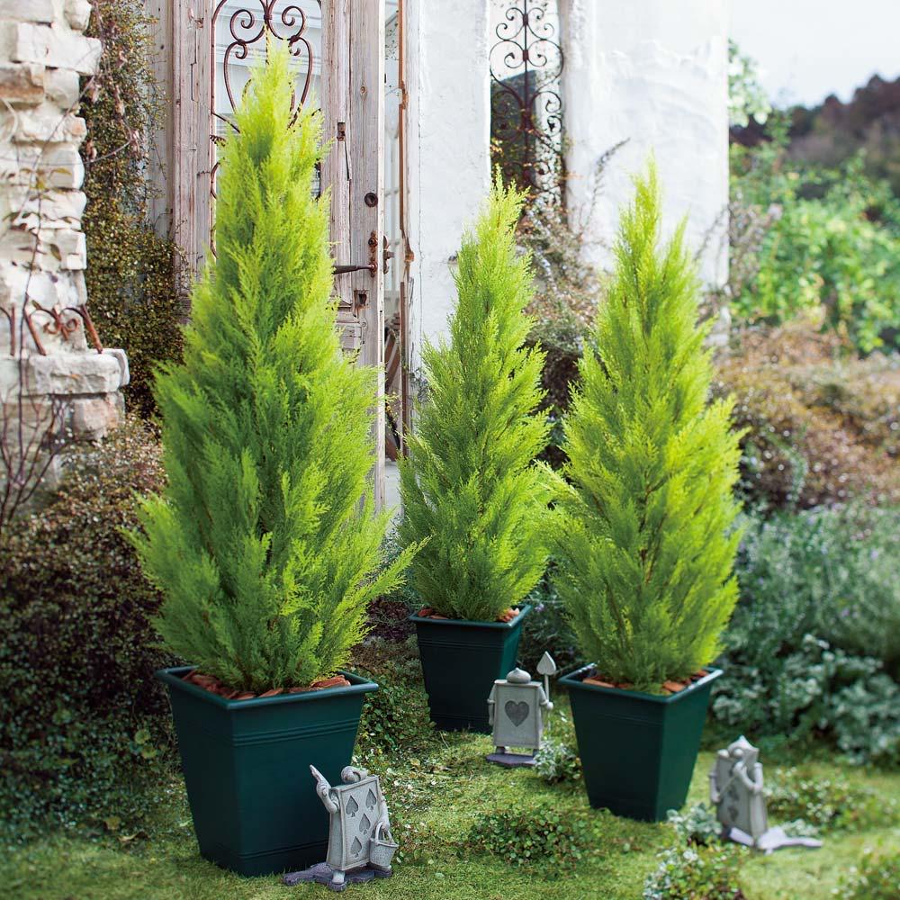 高さ90cm(人工観葉植物ゴールドクレスト) ※写真は(左から)高さ150cm、高さ120cm×2です。 ※お届けの鉢のデザインは若干異なります。