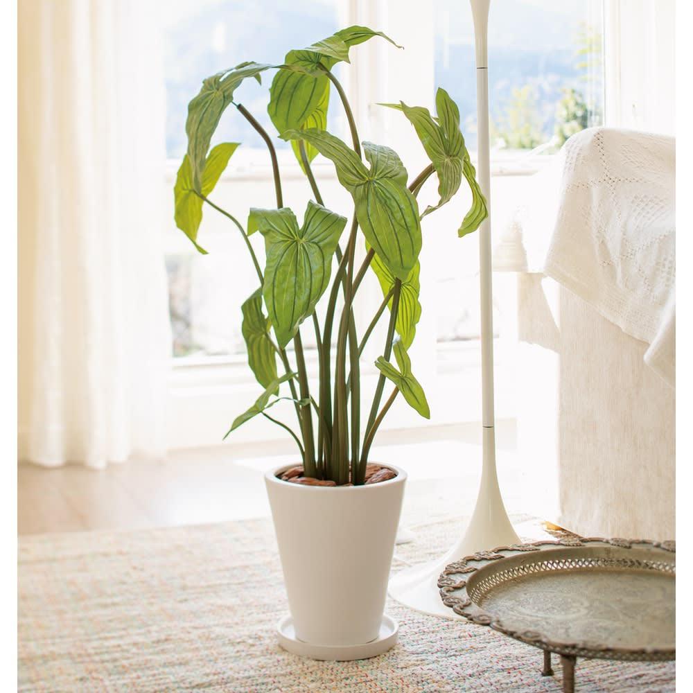 CT触媒加工インテリアグリーン フォックスフェイス カタチのよい葉姿が魅力のフォックスフェイス