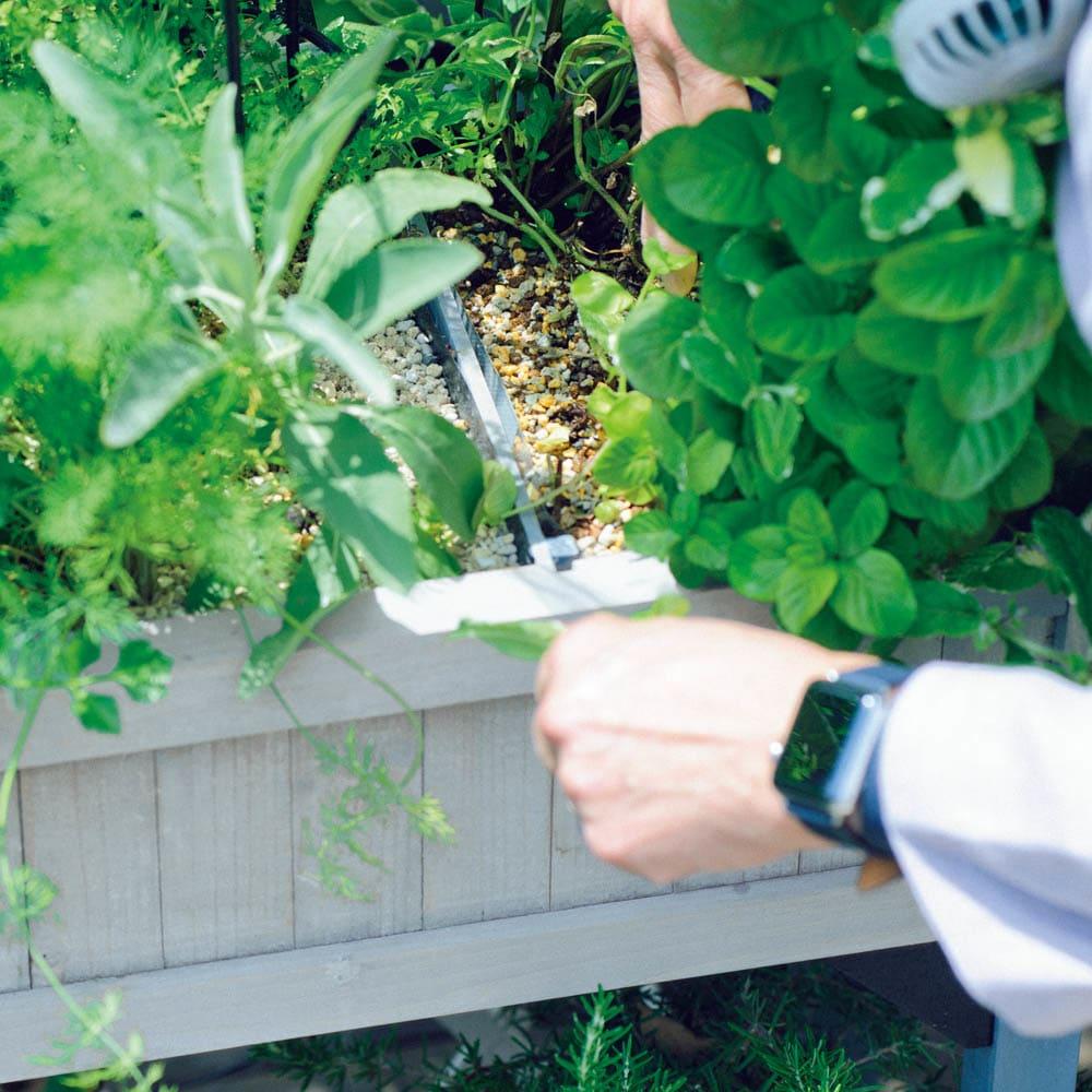 ハーブ用菜園プランター ベジトラグ 薄型(4コマ) ミントは繁りすぎて交雑しやすいので仕切りは必須。