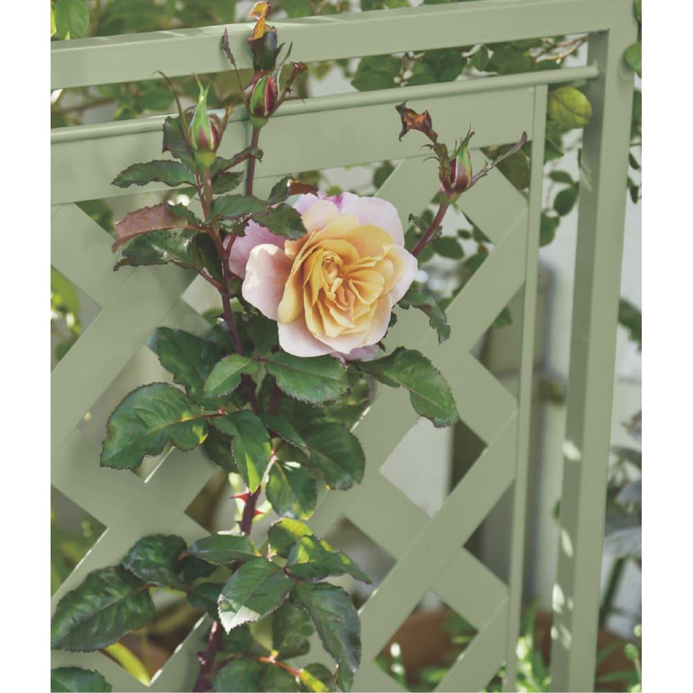 欧風トレリス付きプランターボックス〈セージグリーン〉 高さ161cm やさしいセージグリーン色が、花の色や形を際立たせます。