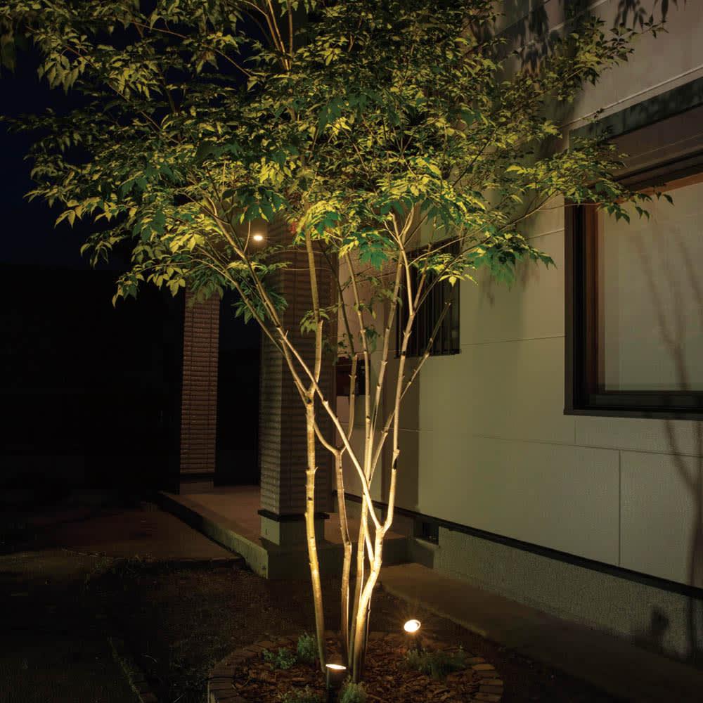 工具不要 簡単に本格ライトアップ!ひかりノベーション基本セット2個組 (ア)木のひかり AFTER 角度が自由に調整できるライトアップで、影をつくり、樹木を美しく引き立てます。