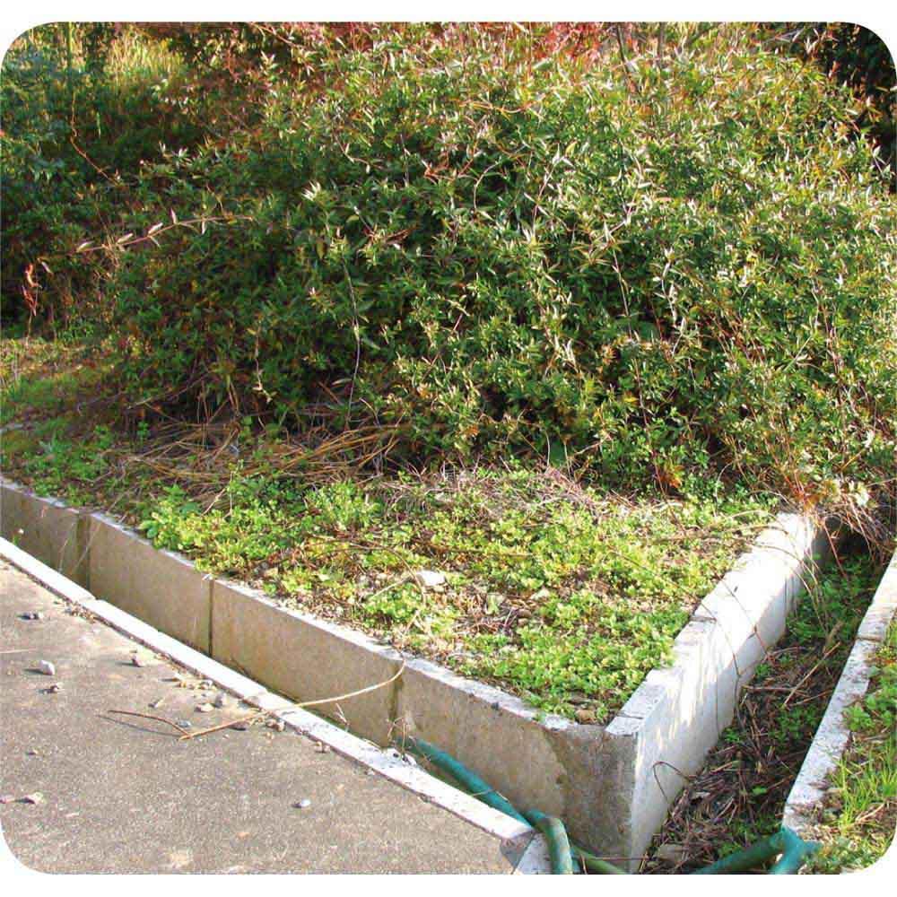 水をかけて固まる土 カチカチ君 (使用前)雑草がこんなにうじゃうじゃ。