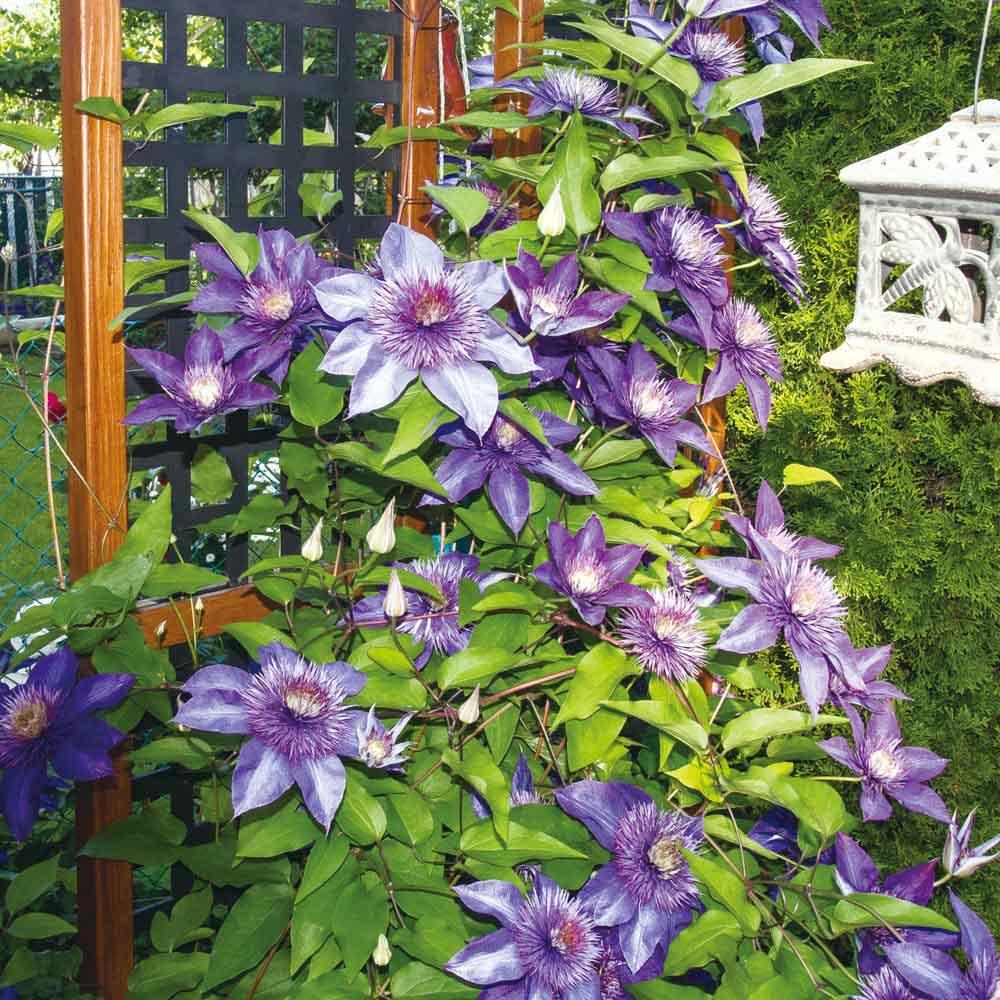 プランター台付きワイドトレリス ロータイプ グレー クレマチスやスイートピーなど、花のきれいなツル植物がおすすめ。