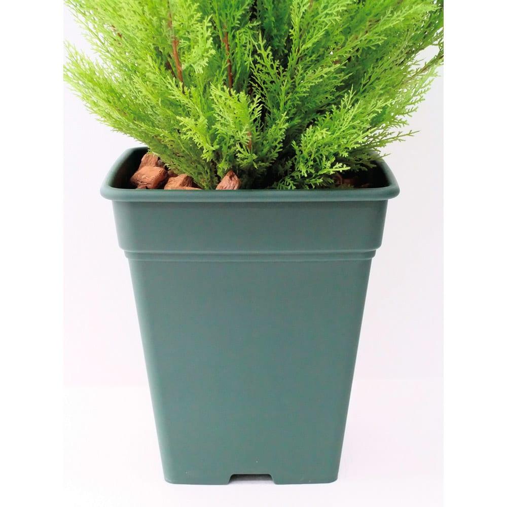 高さ180cm(人工観葉植物ゴールドクレスト) お届けの商品は、こちらの鉢を使用しています。