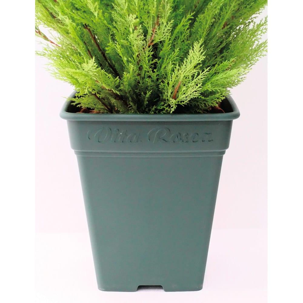 人工観葉植物ゴールドクレスト 120cm お得な2本組 お届けの商品は、こちらの鉢を使用しています。