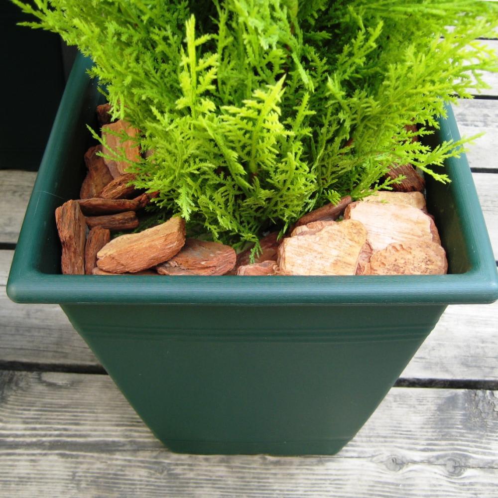 人工観葉植物ゴールドクレスト 120cm お得な2本組 ※お届けの鉢のデザインは若干異なります。