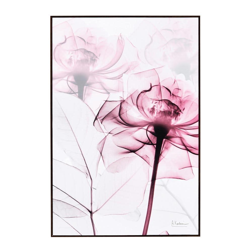 X-RAY/エックスレイ アートフレーム