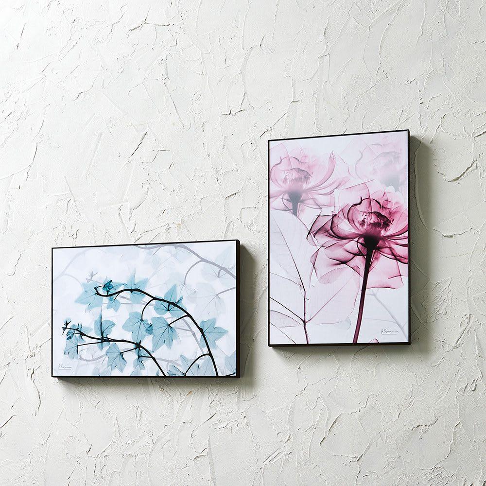 X-RAY/エックスレイ アートフレーム 左から(コ)アイビー、(ウ)ピンクローズ   レントゲン撮影された花々の繊細で神秘的な質感が、モダンな空間を演出します。