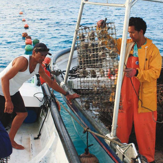 タヒチ リキティア K18 黒蝶グレーパール スパイラル ブレスレット 30ヘクタールの広大な海域で養殖される母貝。毎朝、日が昇る前から貝掃除のために網を上げる。