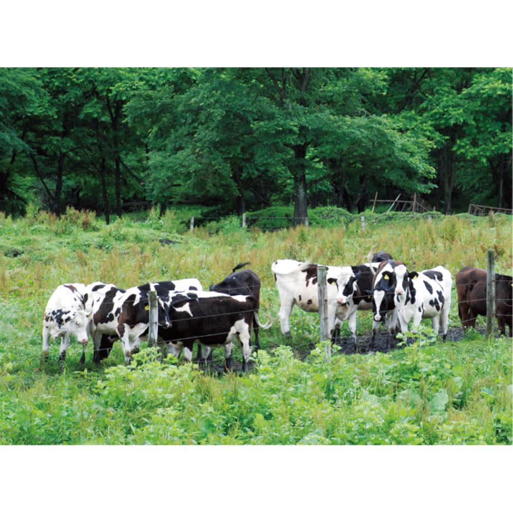 「十勝スロウフード」牛とろフレーク (140g×2個) 北海道・十勝の「ボーンフリーファーム」で伸び伸び育つ牛たち