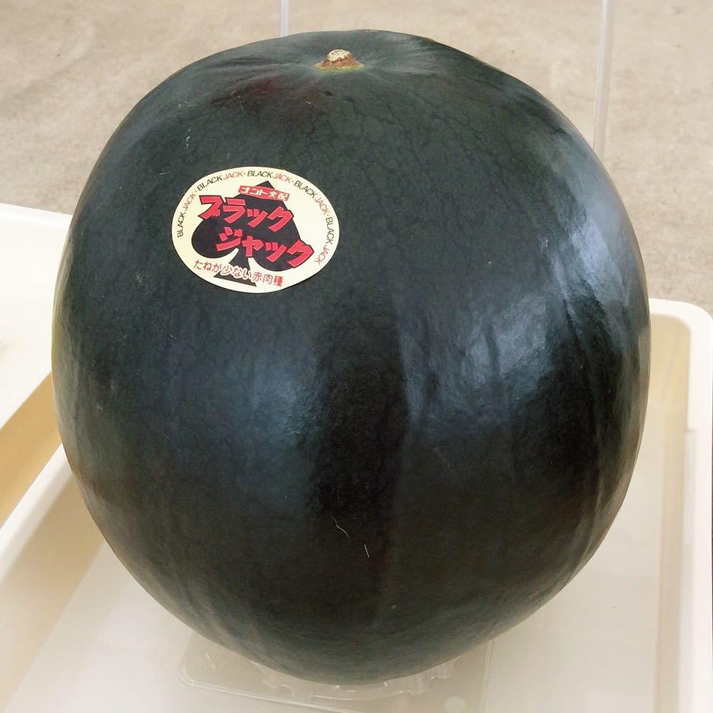 山形産 ブラックジャックすいか (1玉 6~8kg)