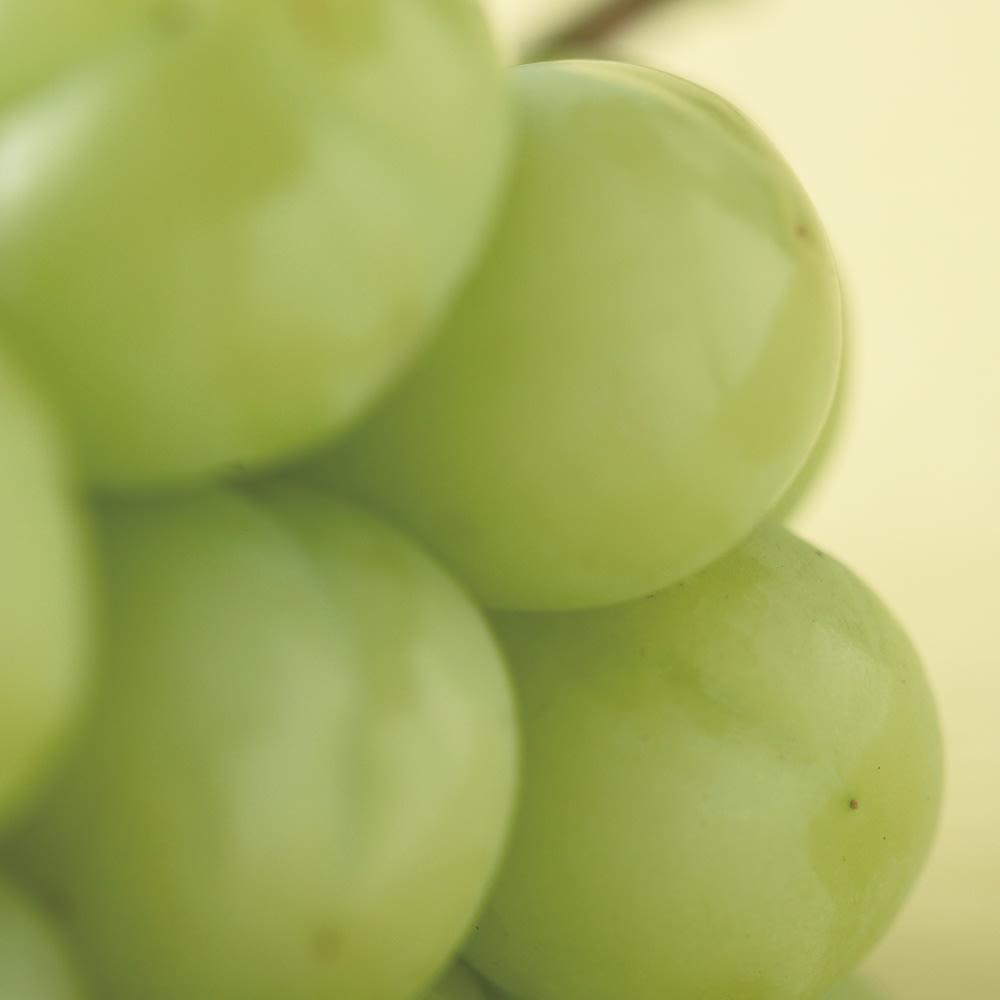 サン・フルーツ厳選 3種のまるごと種なしぶどう食べ比べ 瀬戸ジャイアンツ