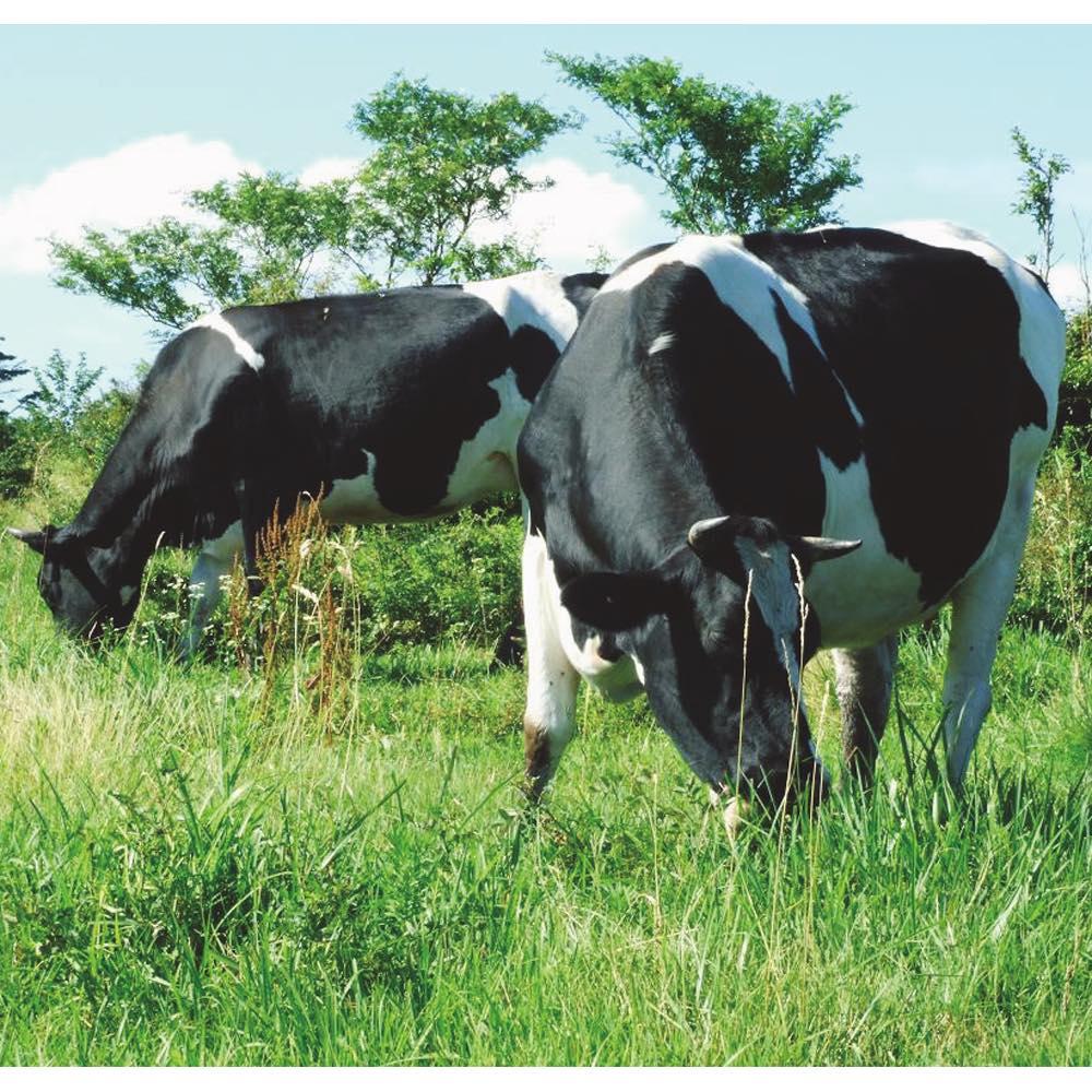 木次乳業「VANAGA(バナガ)」 アイスクリーム (5種 計12個) 質の高い生乳は、奥出雲でのびのび育った牛から生まれます。