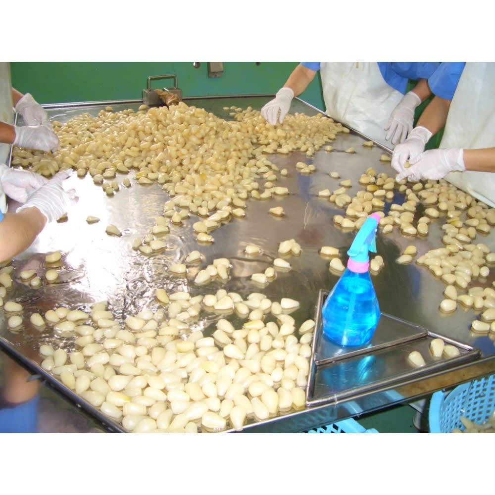 宮崎産 らっきょう甘酢漬け (150g×8袋) 工場では、うす皮を手作業で取り除いています。