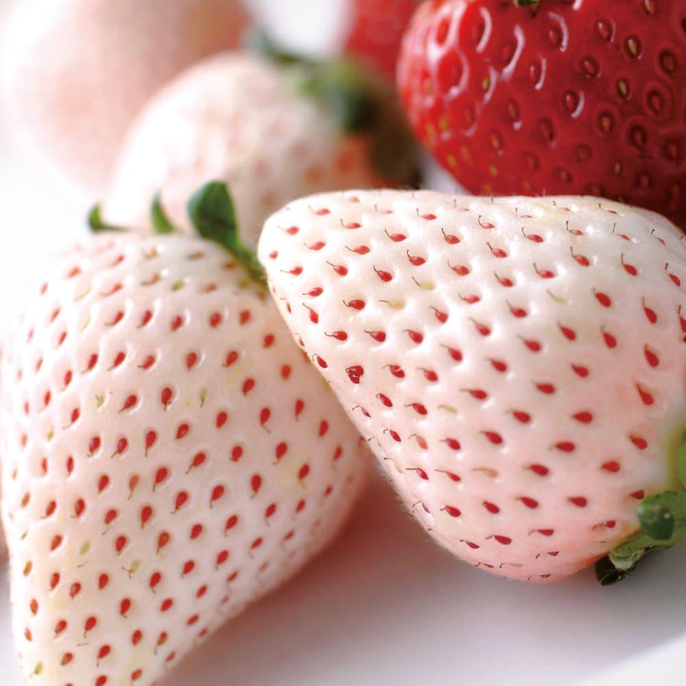 紅白イチゴ (700g) フルーツ