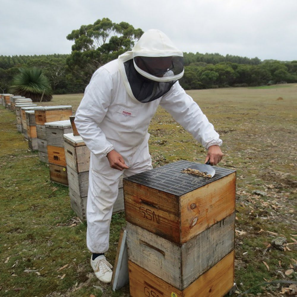 マヌカ&プロポリス (1g×60包) 1箱 【ミツバチの恵みを贅沢に配合 プロポリス】 ミツバチが巣を外敵から守るために、樹脂などから作る天然のバリア物質です。本品にはフラボノイドとミネラルやビタミン類、有機酸などが含まれたオーストラリアのプロポリスを使っています。