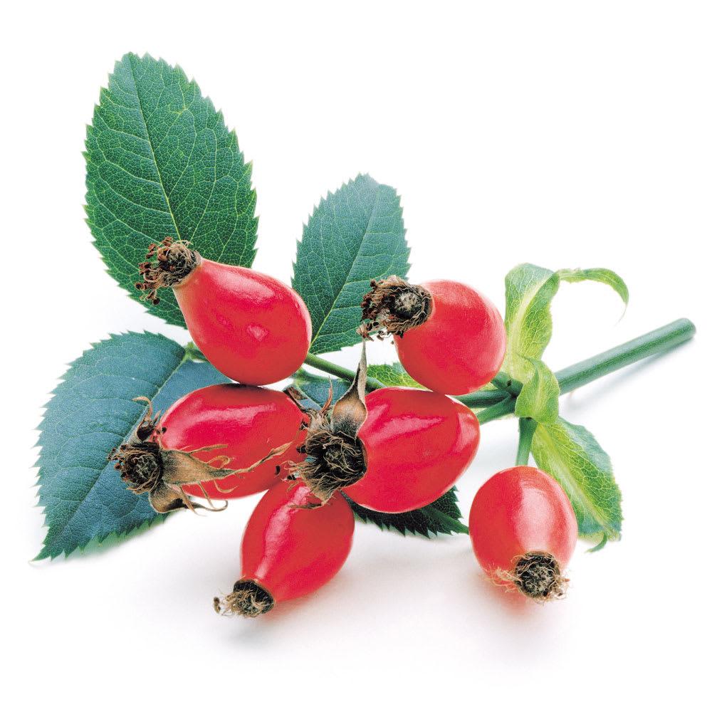 森下仁丹 ヘルスエイド ローズヒップ 180粒 【機能性表示食品】 ローズヒップは、南米チリを原産とするバラ科植物の果実です。ビタミンC、葉酸、ビタミンE、カロチノイドなどが含まれ、ハーブティーや化粧品などに広く使われています。