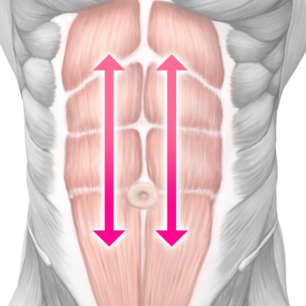 TBC スレンダーパッド(ボディ用) 本体 筋繊維の方向に合わせて効率的な筋肉運動をサポート ※イメージ