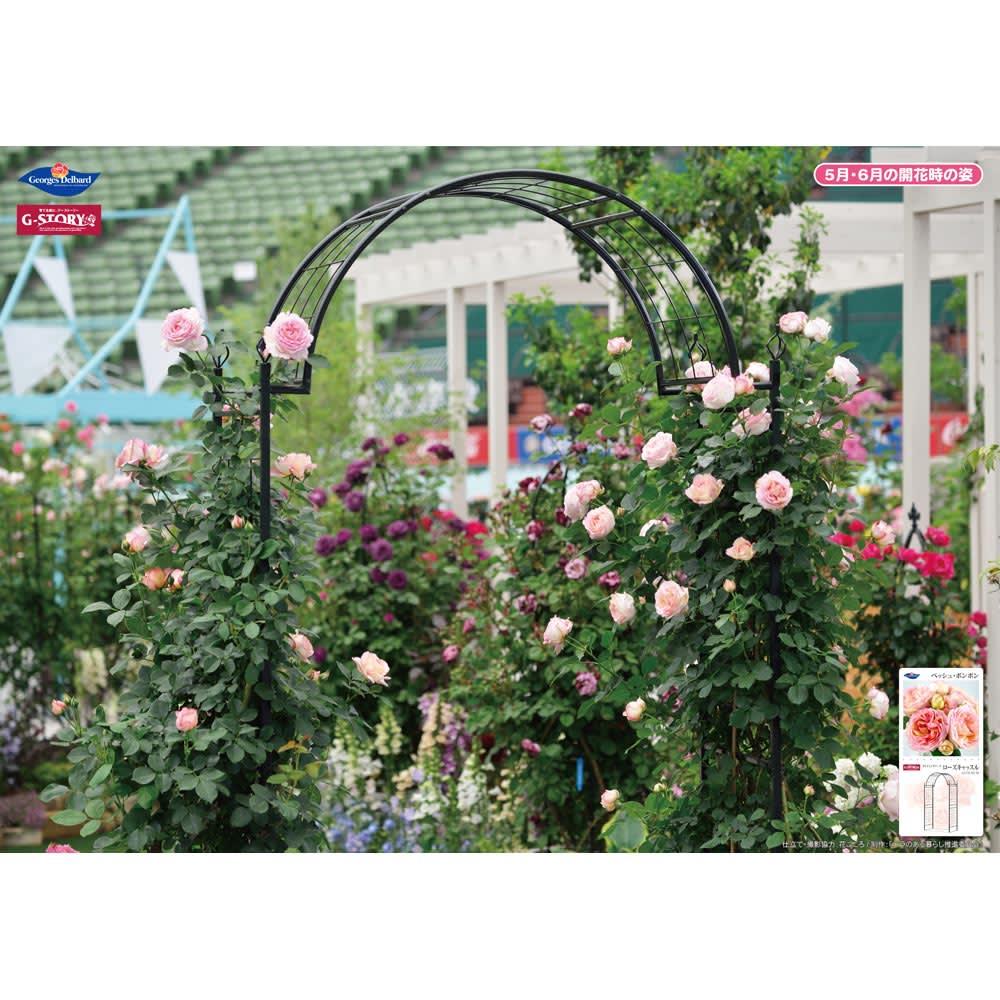 クライミングアーチ ローズキャッスル 開花期には、バラが咲き乱れて美しく。