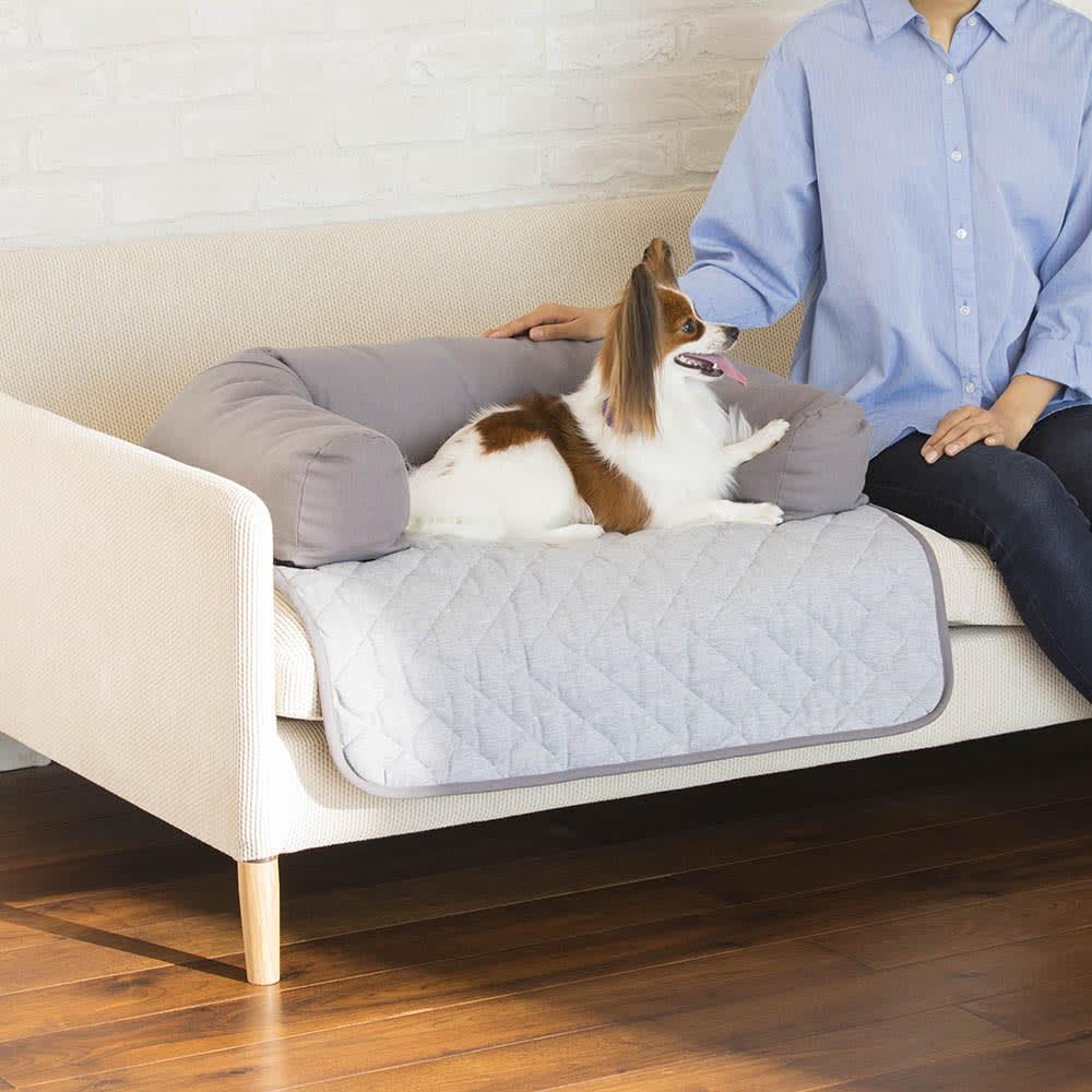 ソファを傷つけないペット専用ソファ「ソファオンソファ」 ちょこんと見つめる愛犬の姿が愛らしい。