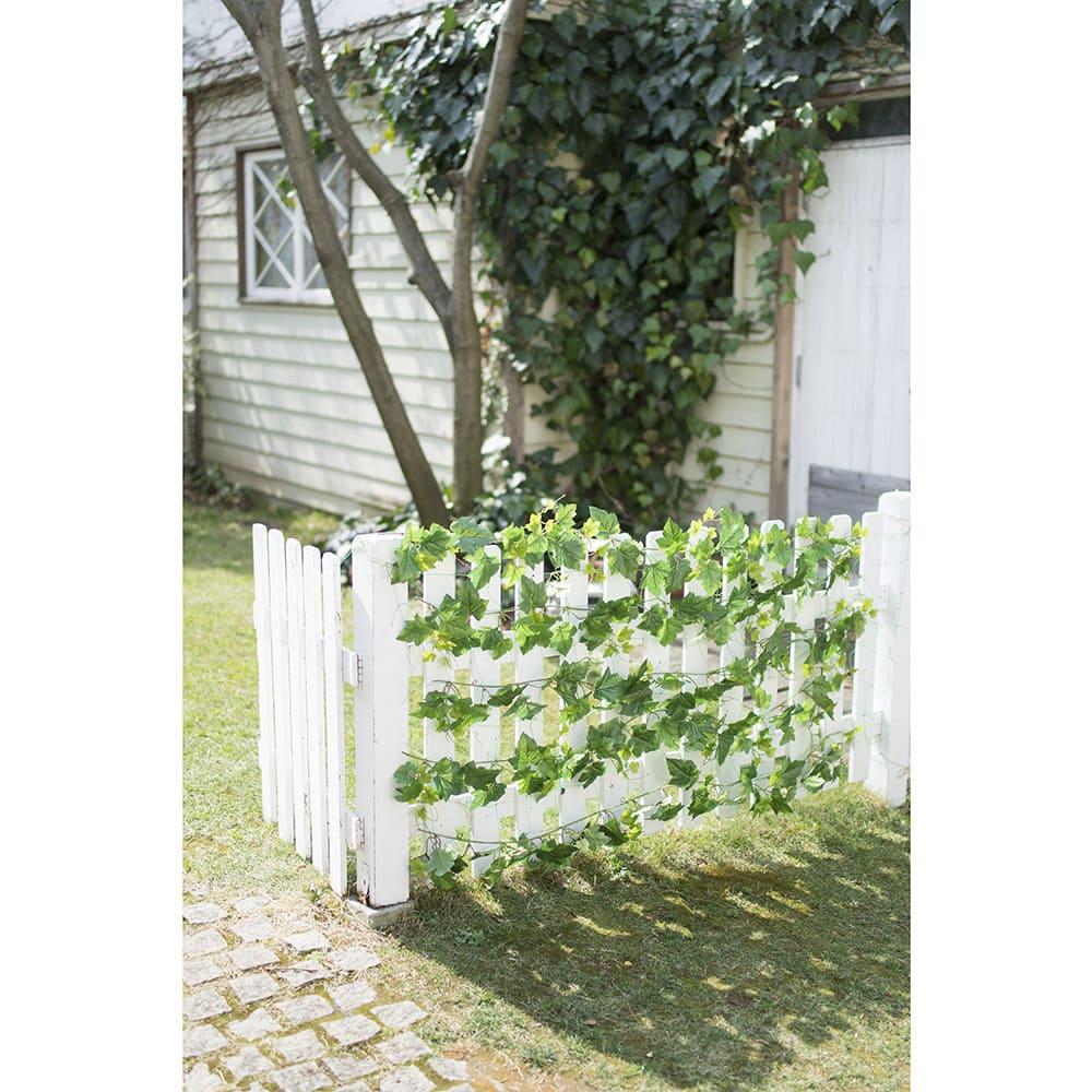 グレープリーフのグリーンカーテン 庭の柵にも取り付け、目隠しに