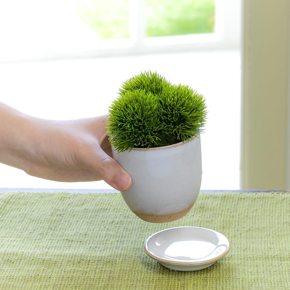 CUPBON 白茶小鉢 サンキライ 受け皿は外せます (写真の商品はマリモとなりますが受け皿仕様は同じです)