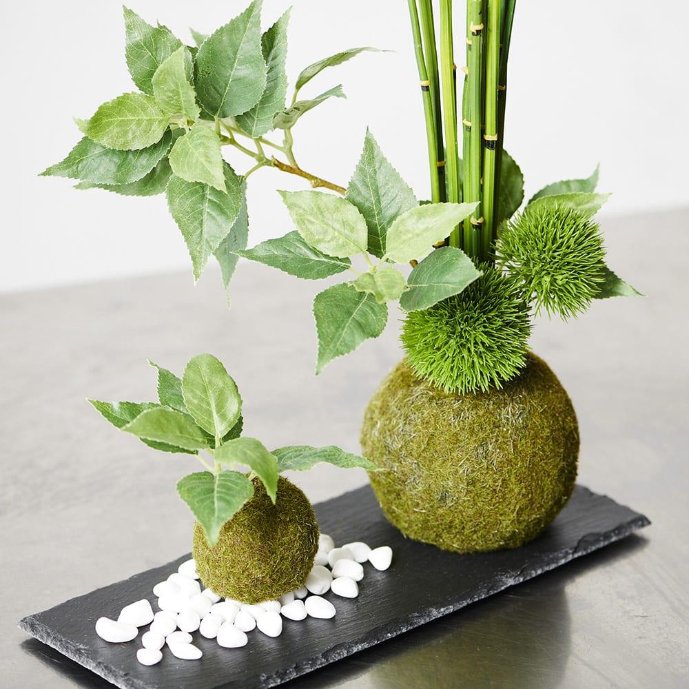 【CUPBON/カップボン】寄植え苔玉(黒岩皿) 桜の葉 大小の苔玉を黒の平皿に寄せて