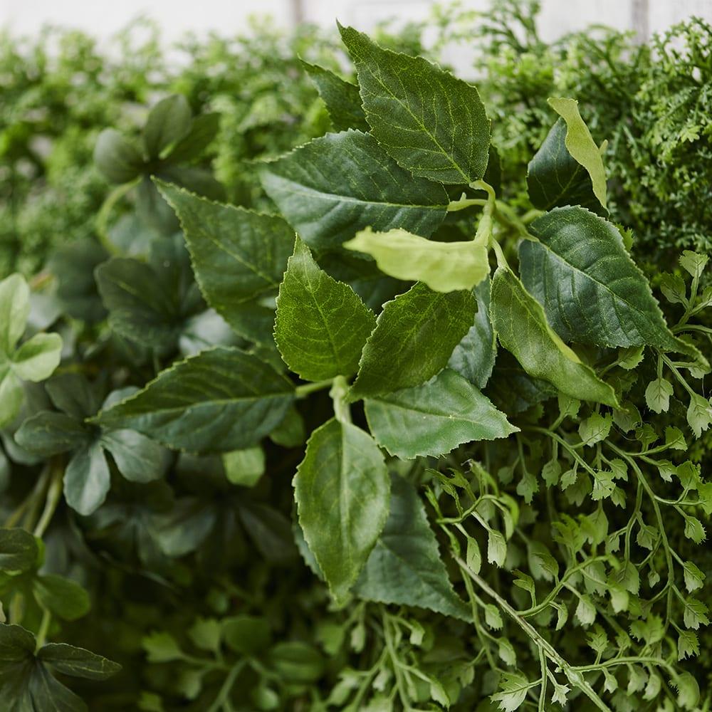 グリーンマット  ふわふわと広がる葉で人気のアジアンタムとシュガーバイン