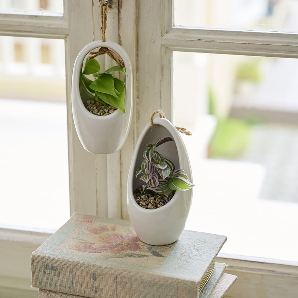 吊るして楽しむミニ観葉 鉢花・鉢植え