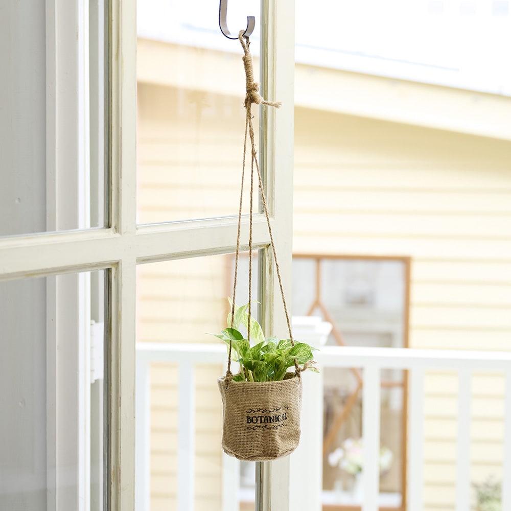 ハンギングジュートポトス 鉢花・鉢植え