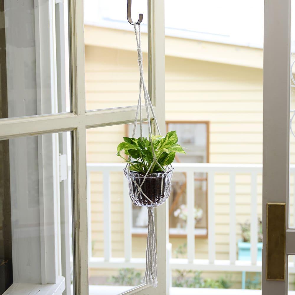ハンギング ポトス ブルームグラス 鉢花・鉢植え