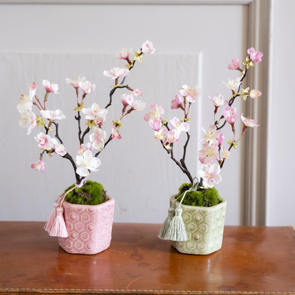 桜の盆栽 小紋筒鉢 ほのかなピンクが愛らしい桜盆栽 左:(ア)桃色、右:(イ)松葉色