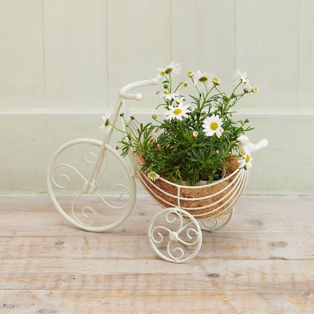 ゆりかごプランター クリスマスローズセット 季節ごとの花鉢やグリーンに入れ替えても楽しめます ※使用例でマーガレットは商品に付属しません