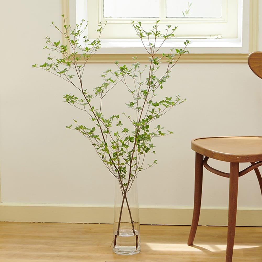 クリア ロングガラス製ベース(花瓶) 長い枝物もオシャレに飾れます(お届けは花瓶のみとなります)