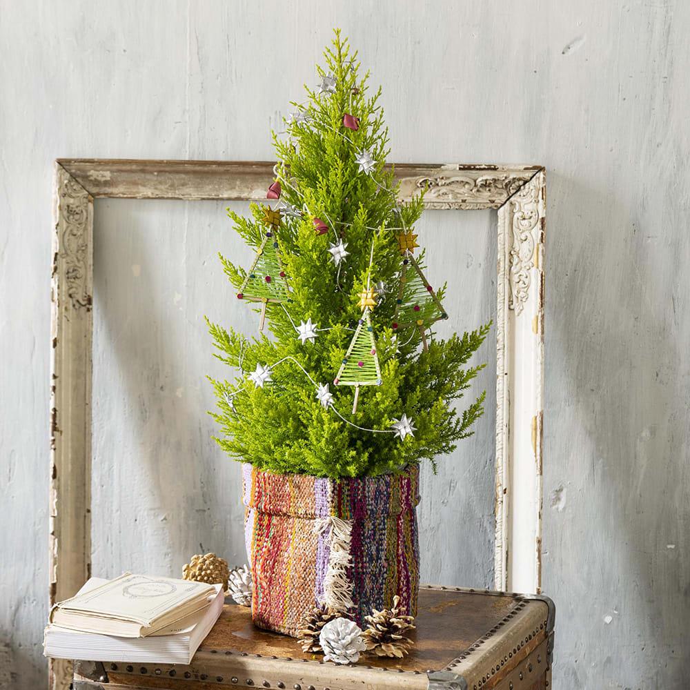 ピープルツリーで楽しむゴールドクレスト リサイクルコットンサリー 鉢花・鉢植え