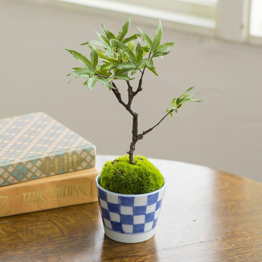 父の日 ギフト CUPBON カップボン モミジ そばちょこ 市松 盆栽 フェイクグリーン 人工観葉植物 造花 おしゃれ 和モダン ギフト 誕生日 日本製 FP3435