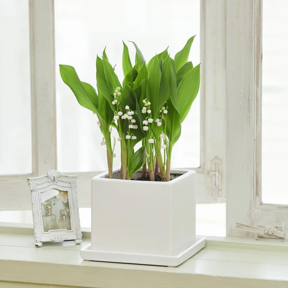雪どけすずらん スズラン 寄せ植え 爽やかな香り 鉢花 生花 春 ギフト プレゼント 誕生日 日本製 FP4712