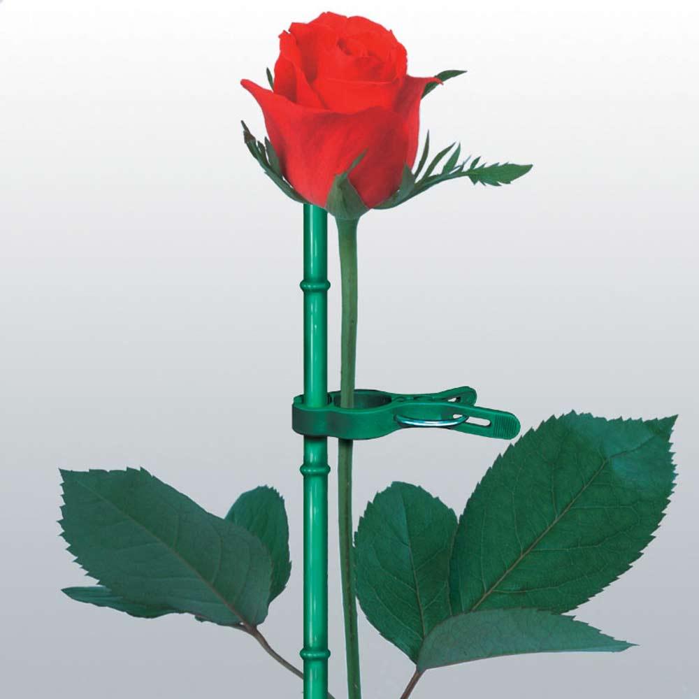 誘引サポートクリップ70本 薔薇の誘引に
