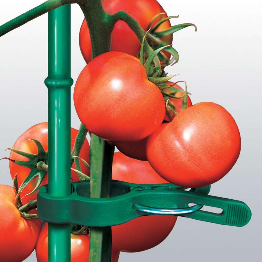誘引サポートクリップ70本 トマトなどの背の高い植物の支柱にも