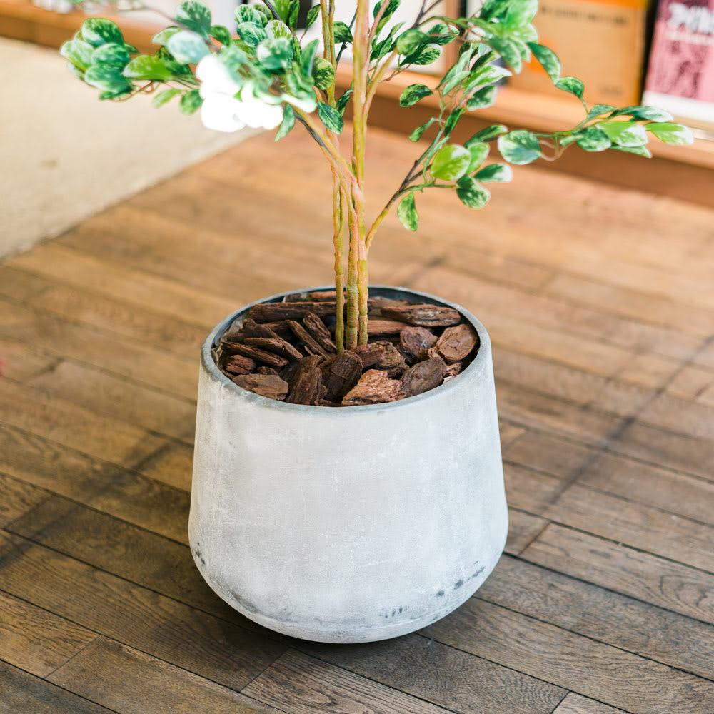 CT触媒加工 インテリアグリーン クワズイモ(鉢カバー付き) 付属の鉢カバーからお手持ちの鉢カバーに交換も可能です。イメージががらりと変わります。(写真の鉢カバーは参考商品です。また、画像の樹木はボックスウッドです。)