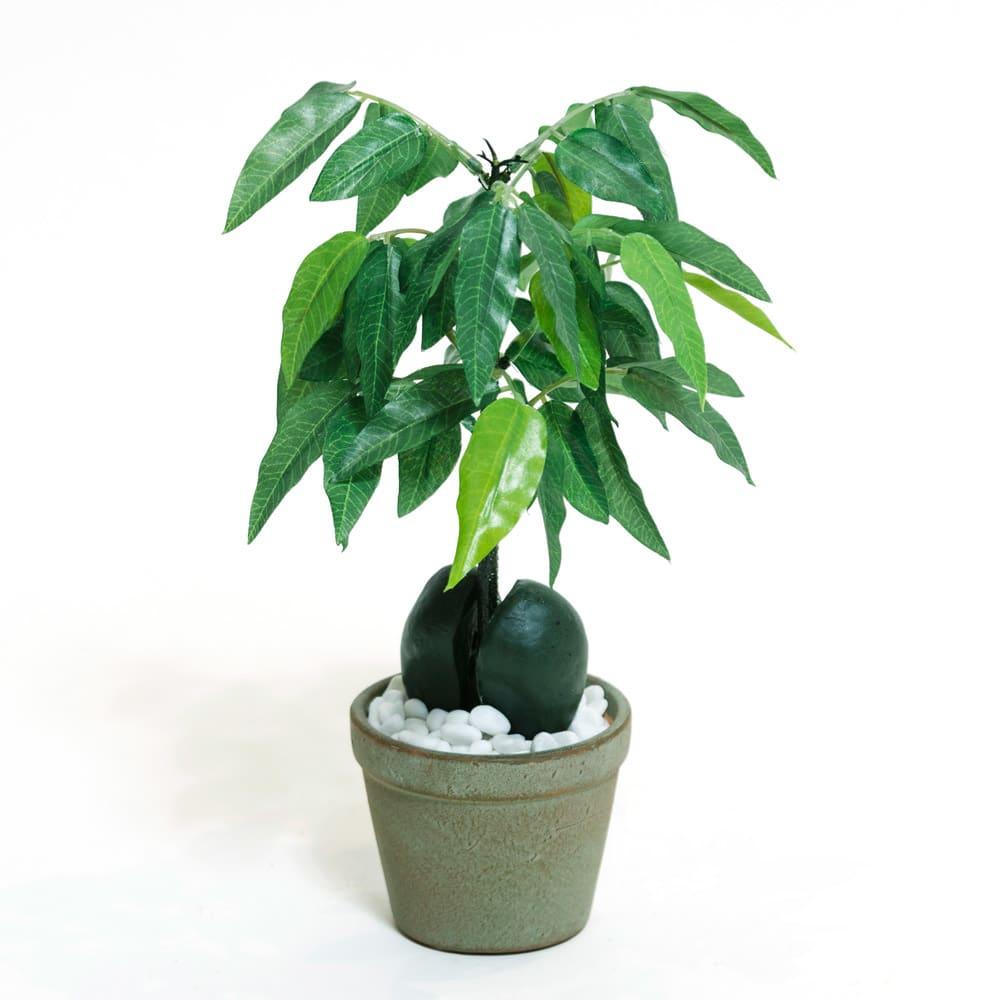 CT触媒 ミニインテリアグリーン 豆の木