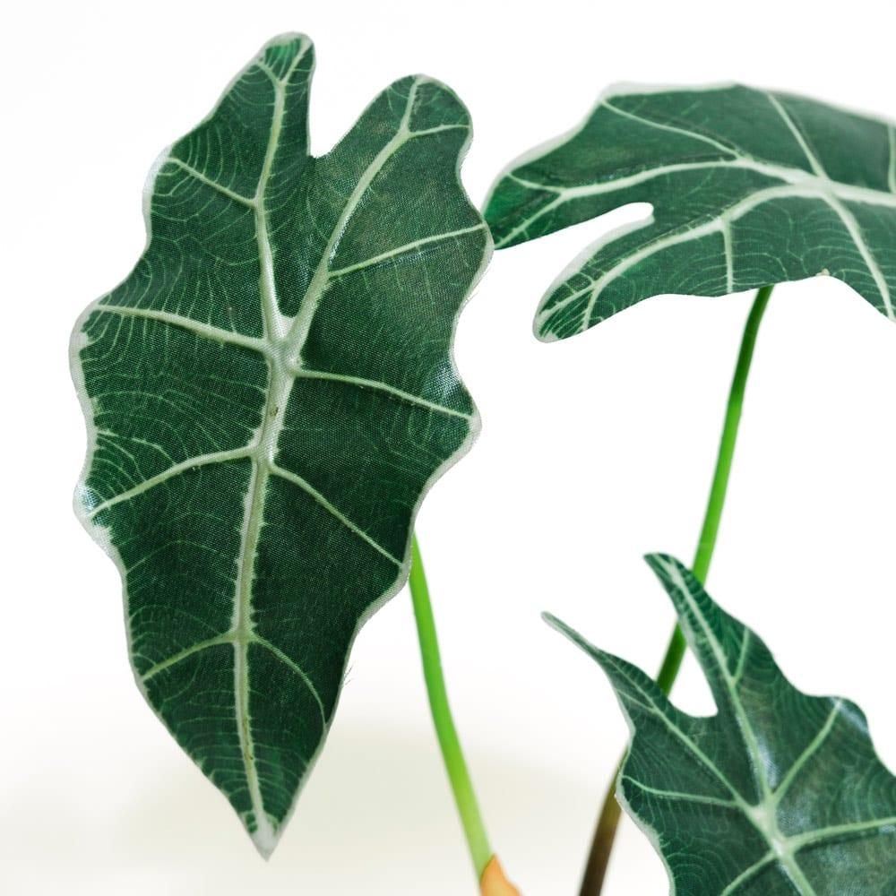 CT触媒 ミニインテリアグリーン アロカシア