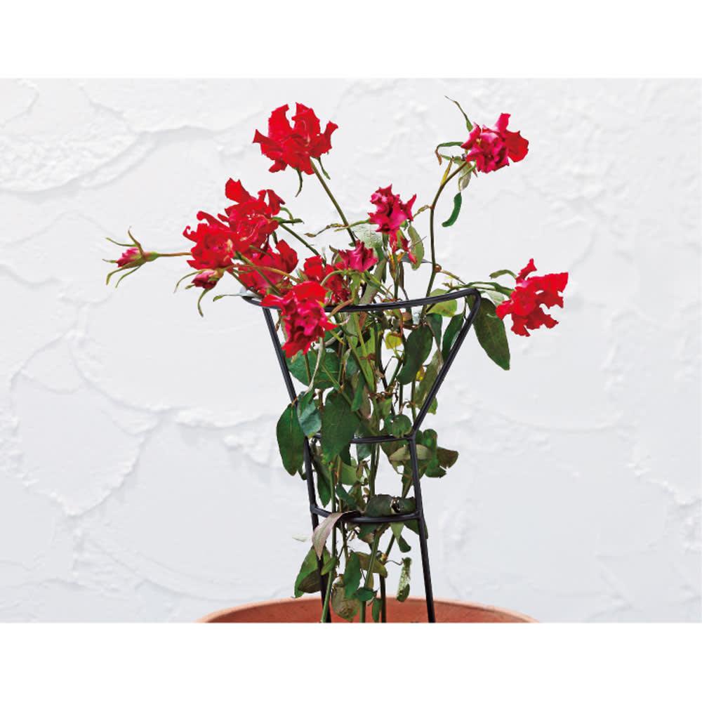 スタンダップガード4本組 高さ50cm 植えたては倒れやすいバラを支えてくれます。