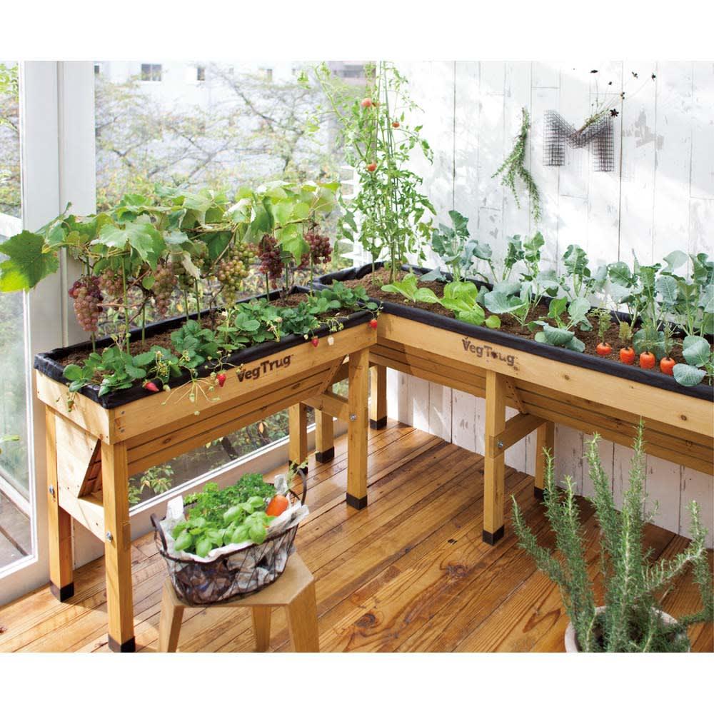 木製菜園プランター ベジトラグ コンパクトミニ (使用例) ※写真は(左)Sサイズ (右)Lサイズです。※お届けはコンパクトミニサイズです。