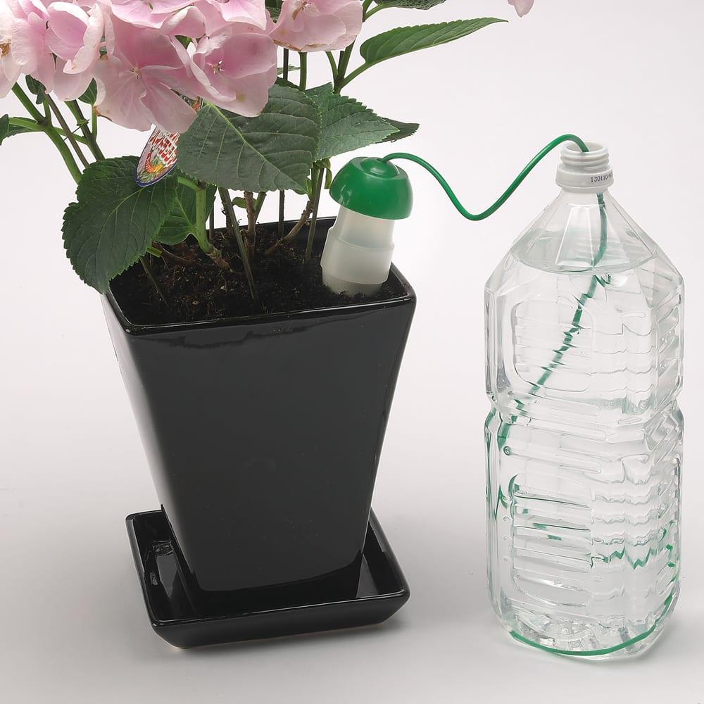 水やり当番Lサイズ6個組【給水アイテム】