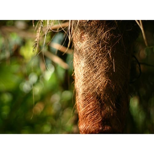 高田耕造商店/紀州野上谷産やらこい棕櫚・シュロたわし 焼檜柄 棕櫚の樹