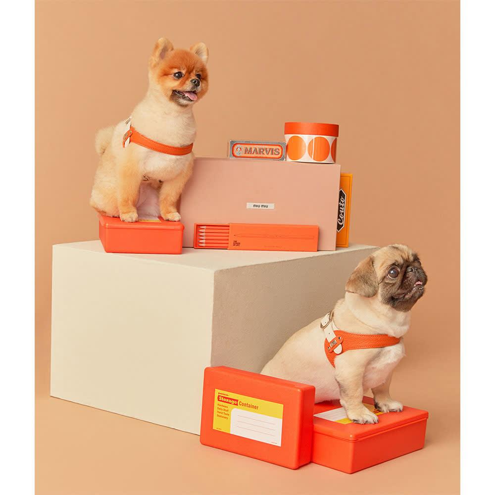 イタリア本革 犬用ハーネス Sサイズ オレンジ/ホワイト/グレー/ホワイト/スカイブルー/ホワイト/バイオレット/ホワイト