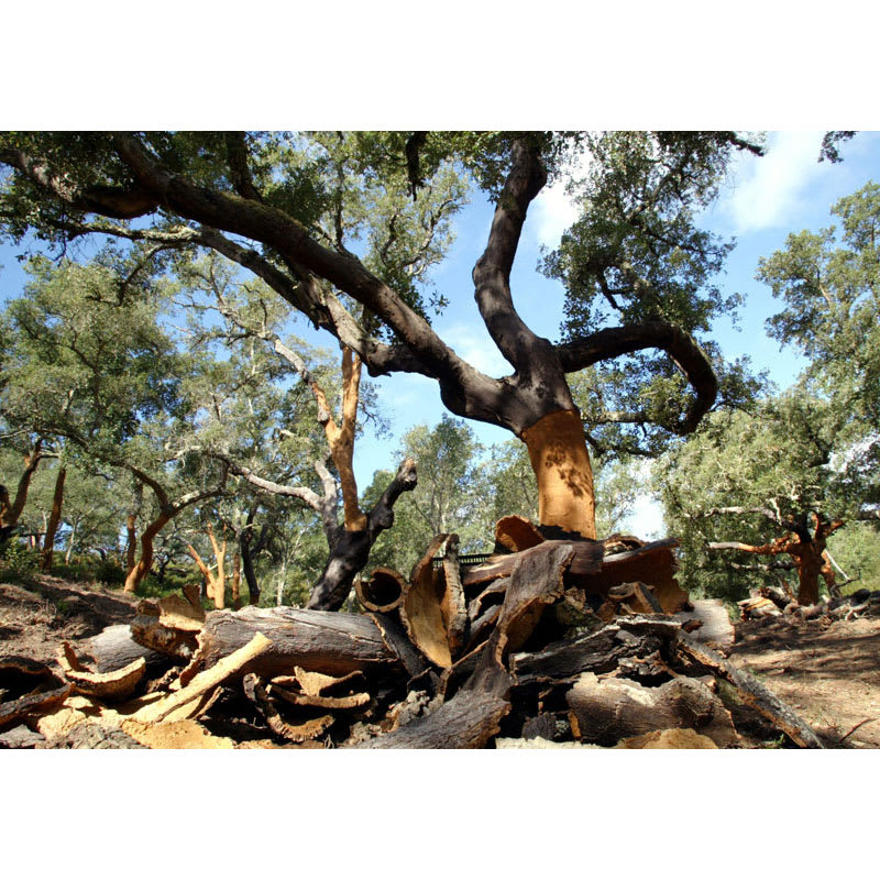 ラウンドオーブンウェアマット3枚組 オークツリー樹皮