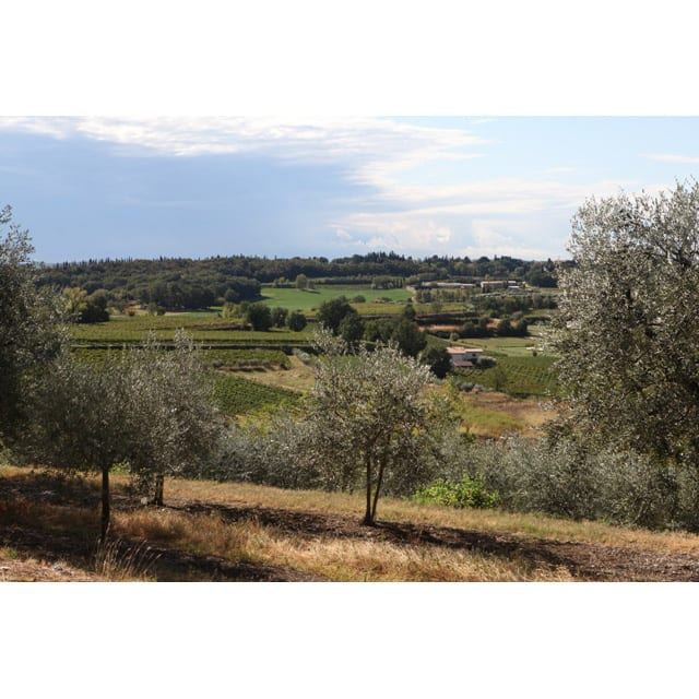 イタリアフリッツァンテ飲み比べ2種セット(スパークリングワイン) 「ラビリント」のぶどう畑風景